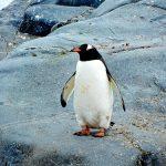 ペンギンが黒白の色の理由