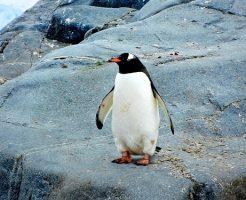 ペンギン かわいい なぜ