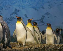 ペンギン 北極