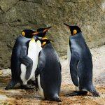 ペンギンの種類とその特徴