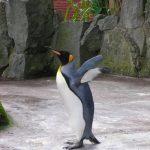 こんなに違いがあります!ペンギンの種類による性格の違い