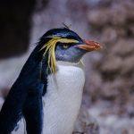 ペンギンの餌になる魚の種類と食べ方
