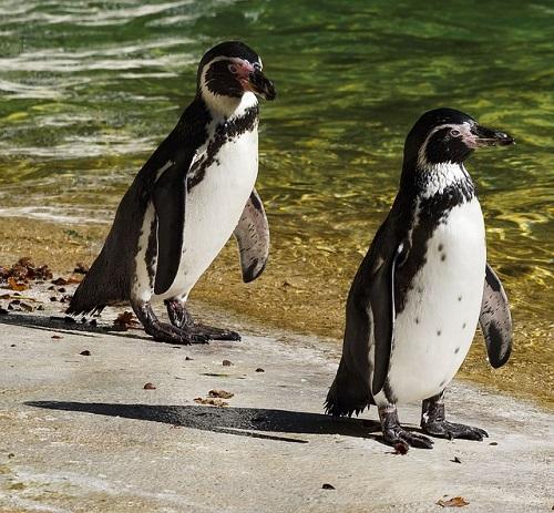 ペンギン えさ