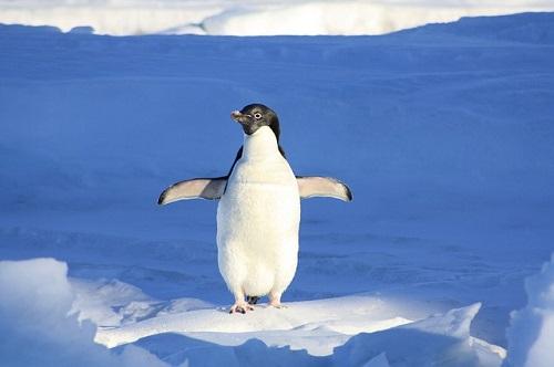 ペンギン 毛