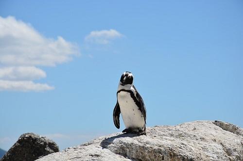 ペンギン 飼育