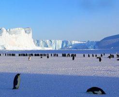 ペンギン 種類
