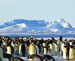 皇帝ペンギン 名前 由来