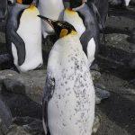 皇帝ペンギンの飼育環境!温度はどれくらい!?
