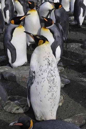 皇帝ペンギン 飼育 温度