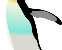 皇帝ペンギン 卵 オス