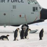 皇帝ペンギンの卵の大きさや特徴について!