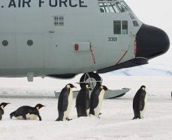 皇帝ペンギン 卵 大きさ